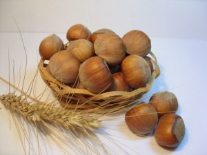 Catalan hazelnut